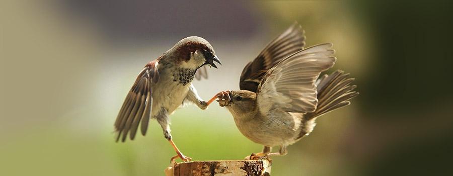 il-conflitto-di-coppia-dinamiche-relazionali-e-mediazione